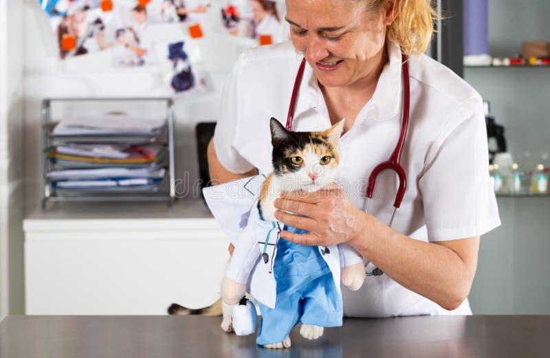 Ветеринарная клиника с котенком стоковое фото