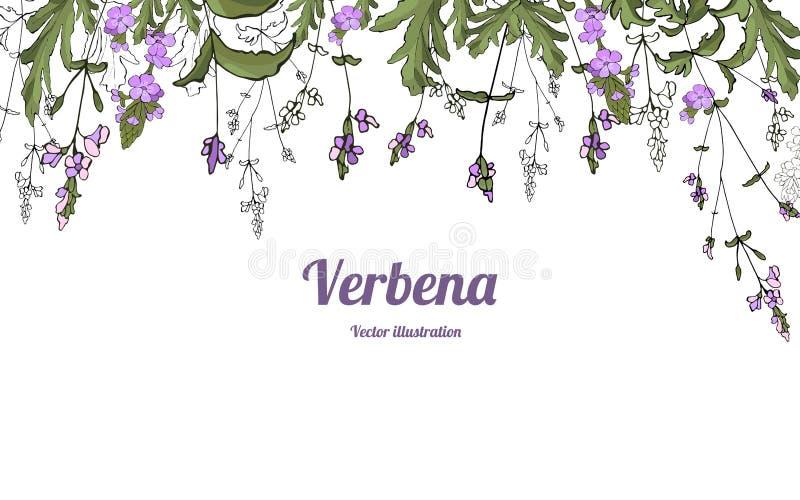 Вербена 2 шаблона иллюстрация вектора