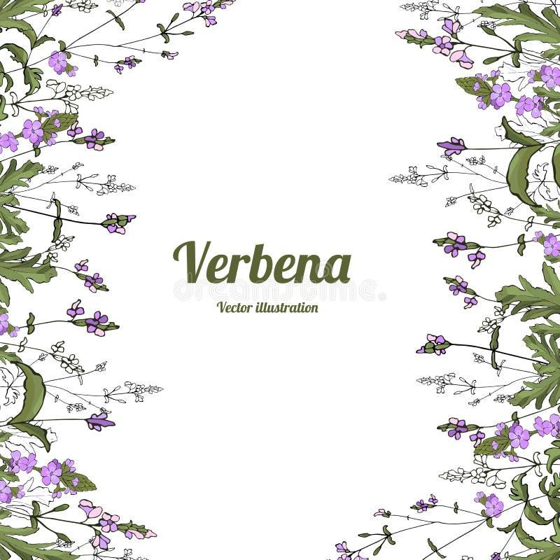 Вербена 2 шаблона бесплатная иллюстрация