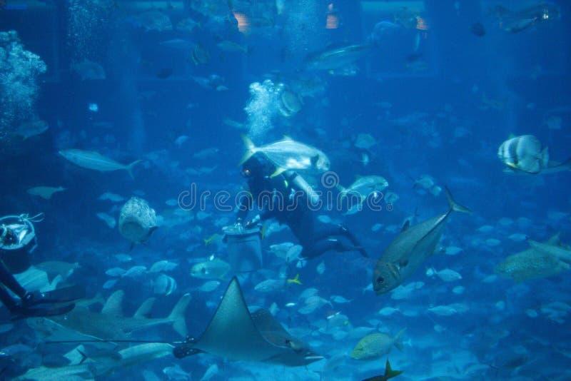 Взаимодействие рыб водолаза стоковая фотография