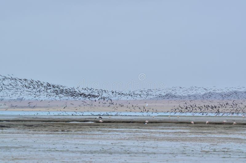 Взгляд летания птиц стоковое фото rf