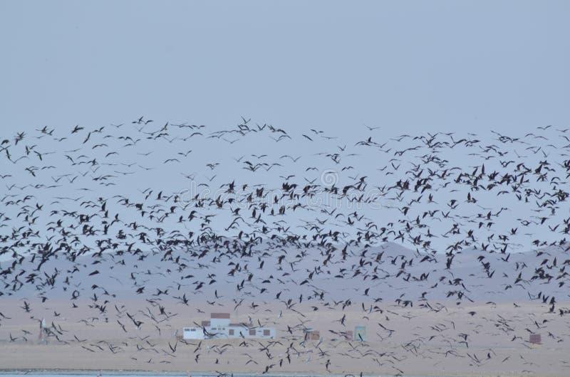 Взгляд летания птиц стоковое фото