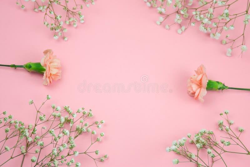 Взгляд сверху рамки цветков гипсофилы и гвоздики стоковые изображения rf