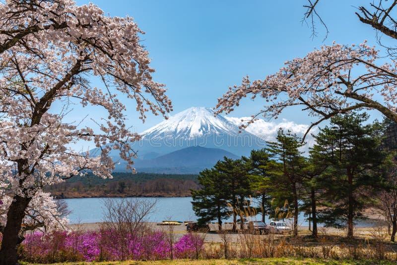 Взгляд цветков вишневого дерева Mount Fuji и полного цветения белых розовых на седзи озера стоковая фотография rf