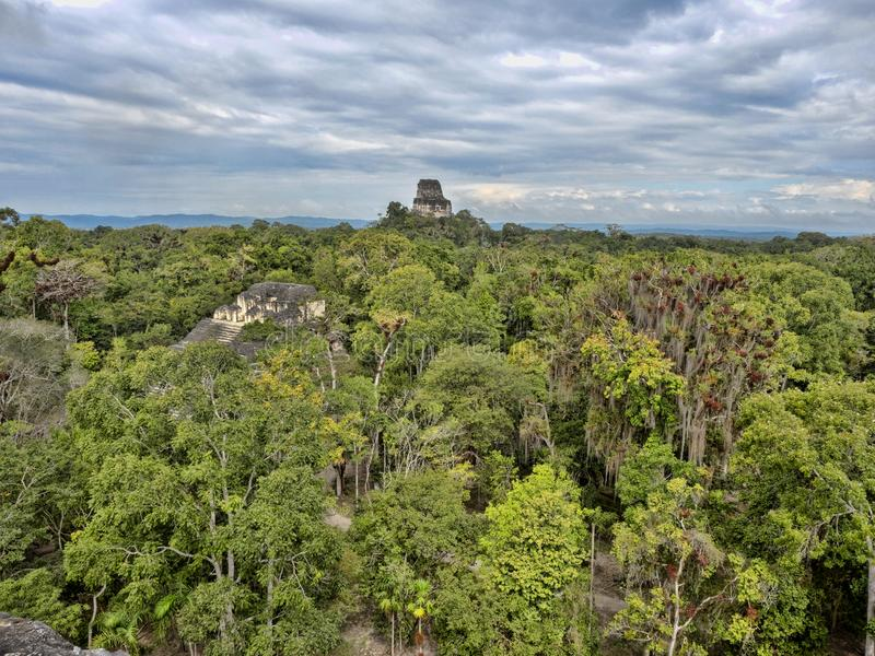 Взгляд от высоты пирамиды спрятанной в городе плотной нации леса самом значительном майяском парка Tikal, Гватемалы стоковые фотографии rf