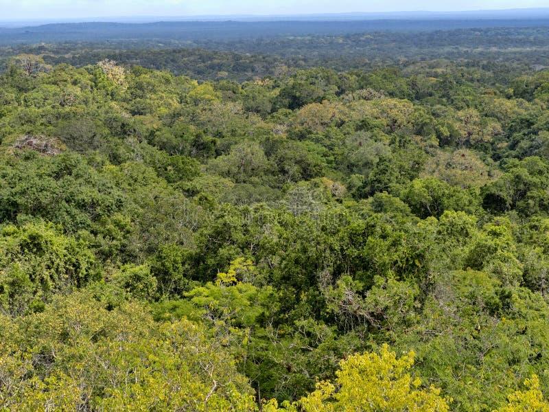 Взгляд от высоты пирамиды спрятанной в городе плотной нации леса самом значительном майяском парка Tikal, Гватемалы стоковое изображение rf