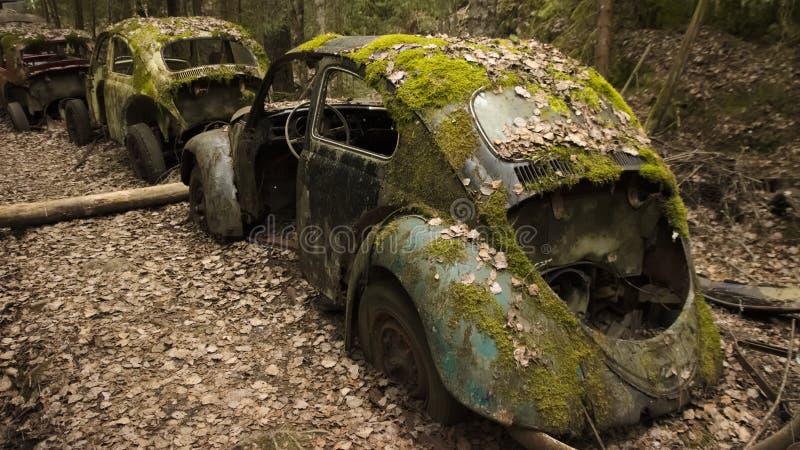 Винтажные автомобили в scrapyard в шведском лесе стоковые изображения