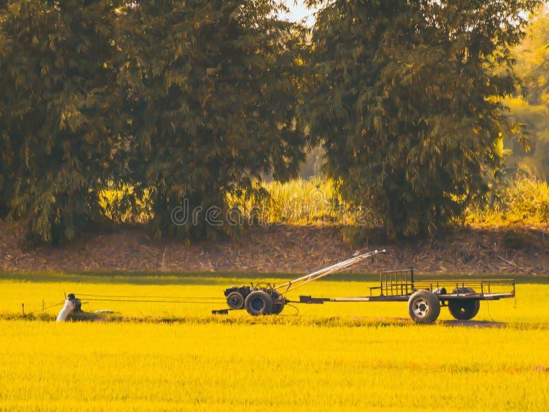 Винтажный автомобиль корабля машины с заводами и желтое поле на предпосылке ландшафта весны лета стоковое фото rf