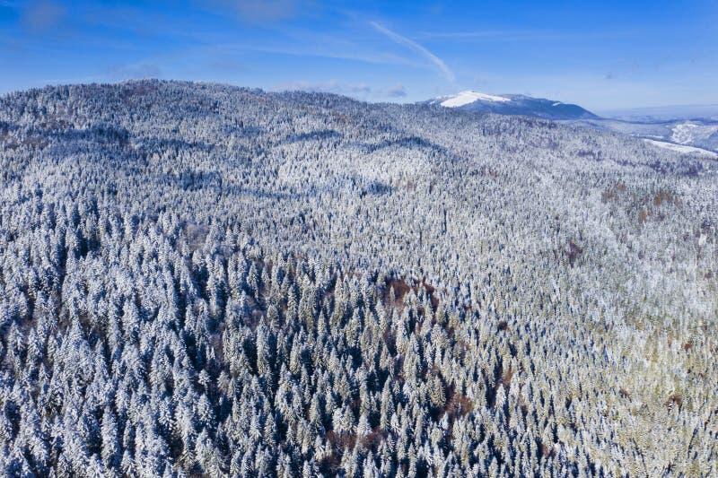 Вид с воздуха вечнозеленого леса в зиме стоковые изображения