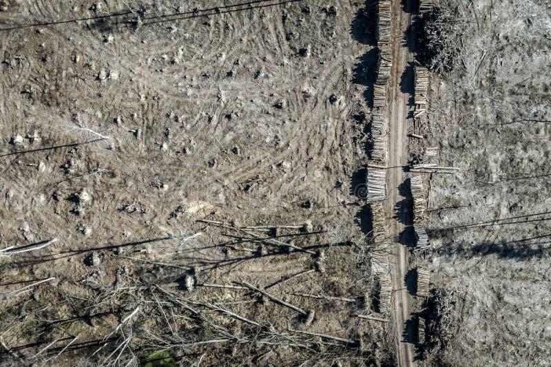 Вид с воздуха ужасного леса обезлесения для сбора стоковое изображение rf