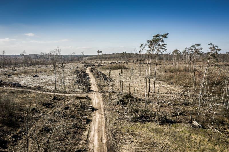 Вид с воздуха ужасного обезлесения, вносящ в журнал, экологическое разрушение, Польша стоковые изображения rf
