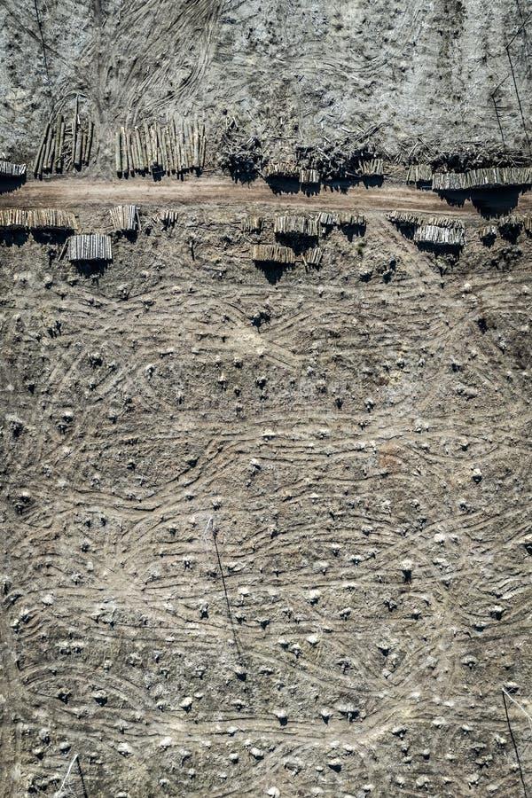 Вид с воздуха ужасного обезлесения сбор леса, Польша стоковая фотография