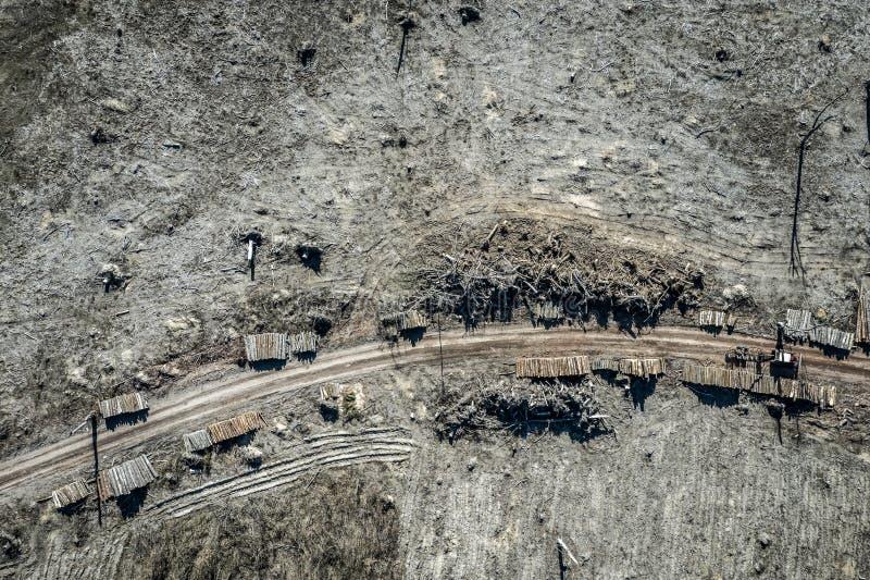 Вид с воздуха ужасного обезлесения, разрушил лес для сбора, Польшу стоковые изображения rf