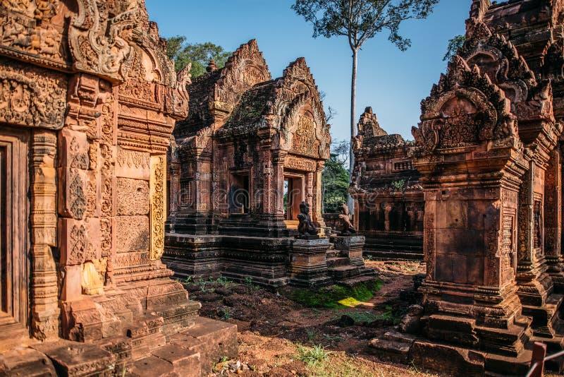 Виски Angkor Wat в Камбодже, животиках Prohm, Siem Reap стоковое изображение