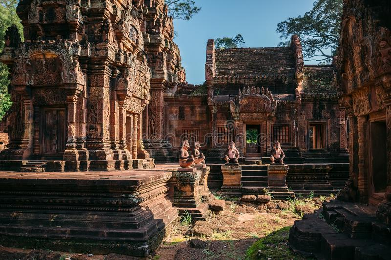 Виски Angkor Wat в Камбодже, животиках Prohm, Siem Reap стоковая фотография