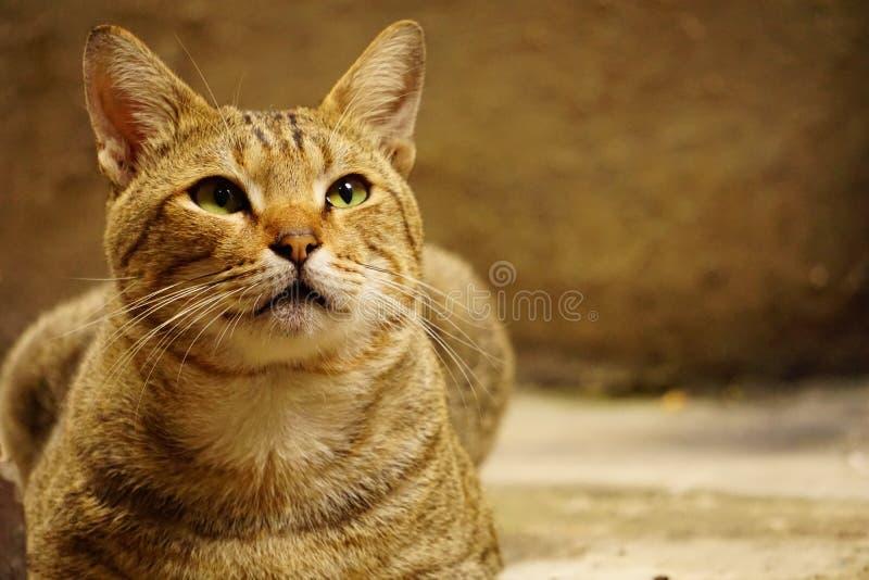 влияние голубого прибора кота камеры цифровое формирует радиацию фото модели изображения жары ультракрасную делая не реальное уса стоковые фотографии rf