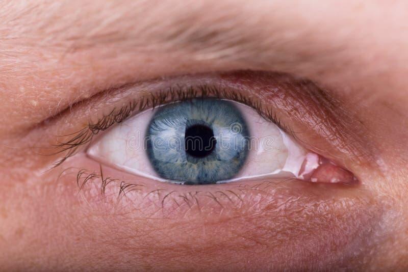 Внимательный прозорливый мужской пристальный взгляд Крупный план глаз человека стоковая фотография rf