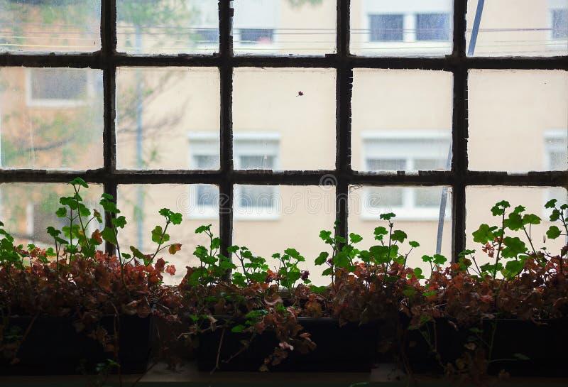 Вянуть листья и окно стоковые фотографии rf
