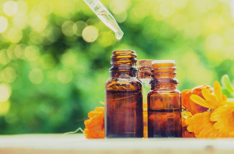Выдержка calendula лекарственные растения Селективный фокус стоковое изображение rf