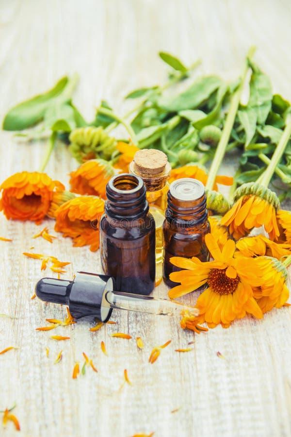 Выдержка calendula лекарственные растения Селективный фокус стоковое изображение