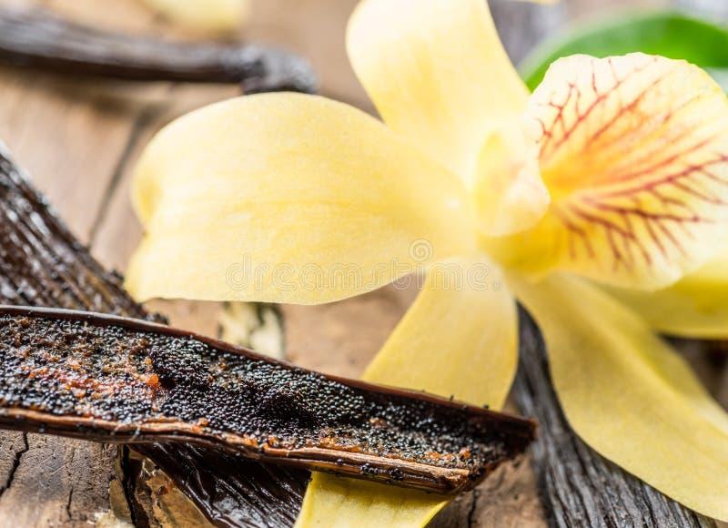 Высушенные ванильные плоды и ванильная орхидея на деревянном столе стоковое фото rf