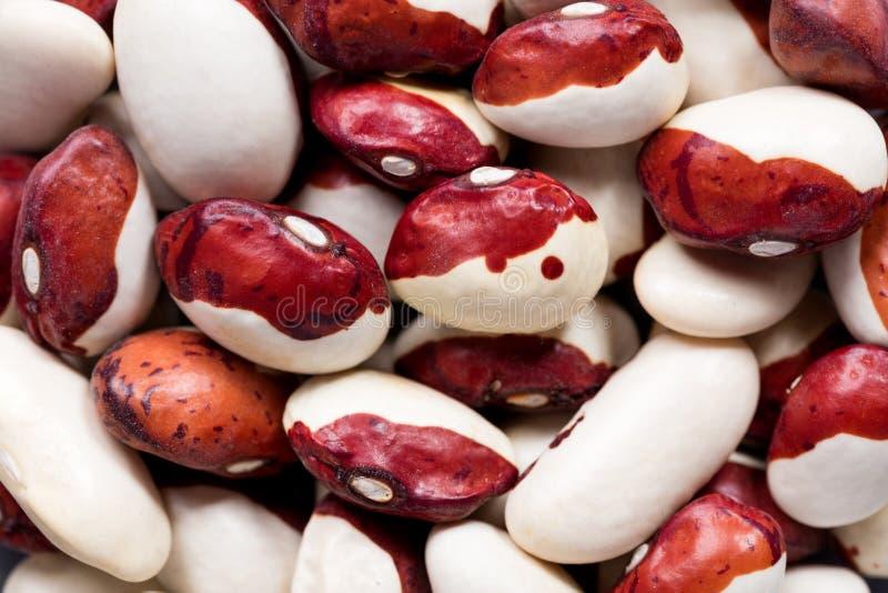 Высококачественные семена красных фасолей крышки, бобов в форме текстуры для вашего красивого сада Смогите быть использовано прои стоковое изображение