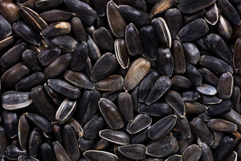 Высококачественные семена декоративного солнцецвета, в форме текстуры для вашего красивого сада Смогите быть использовано произво стоковые изображения rf