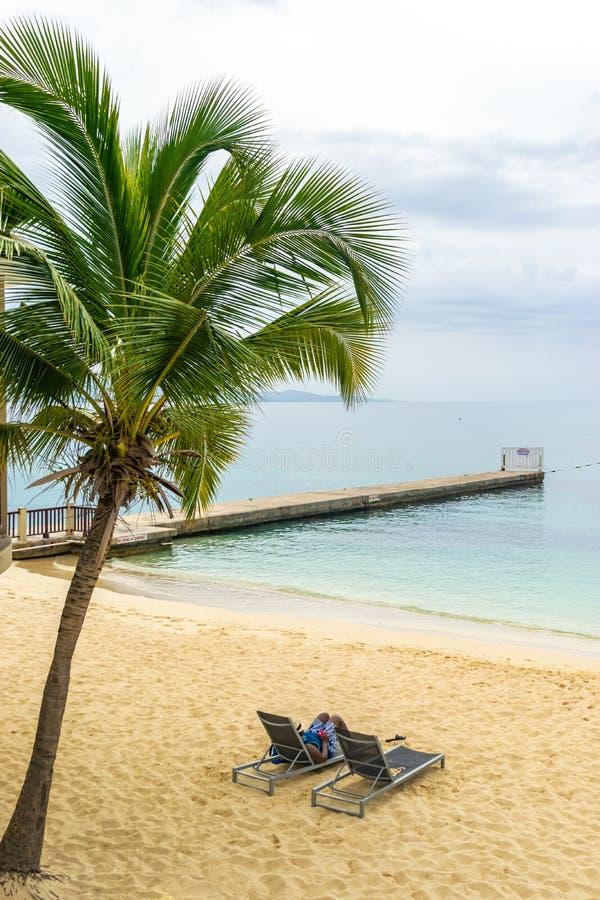 Высокорослая пальма кокоса на красивом тропическом пляже с белым песком острова стоковые фотографии rf