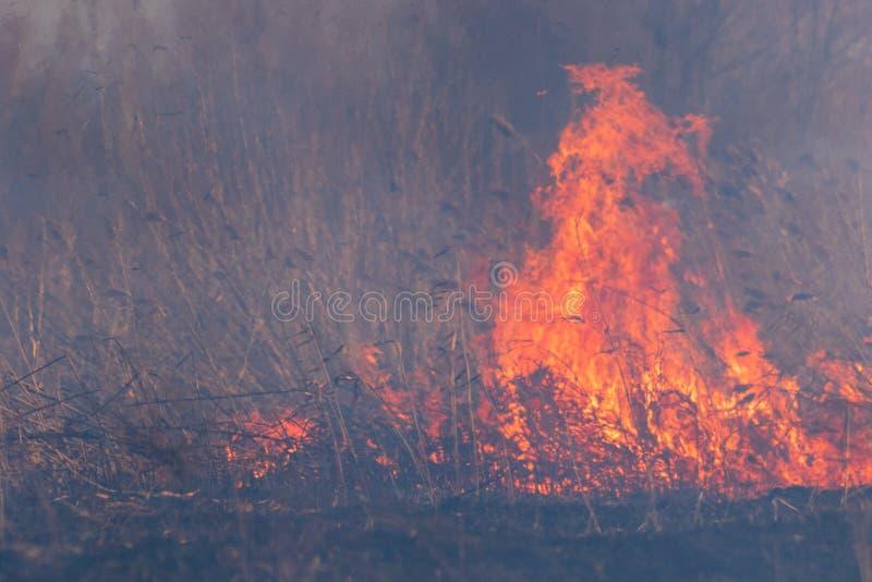 В массиве леса горения дыма и огня стоковые изображения
