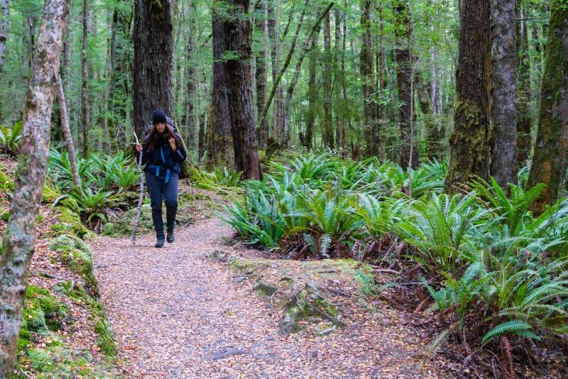 В дождевом лесе Новой Зеландии стоковые изображения rf