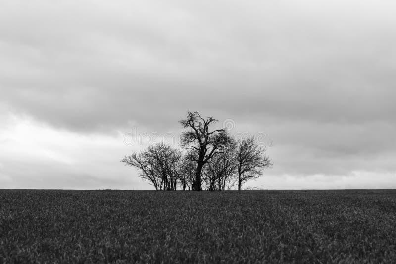В середине поля, обнаженные деревья стоят в штормовой погоде стоковые фотографии rf