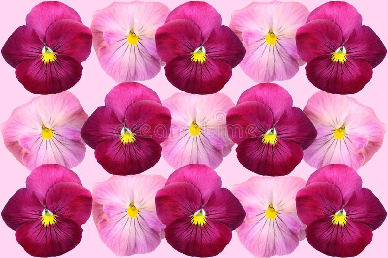 Ð'eautiful floral background of violets royalty free stock photo