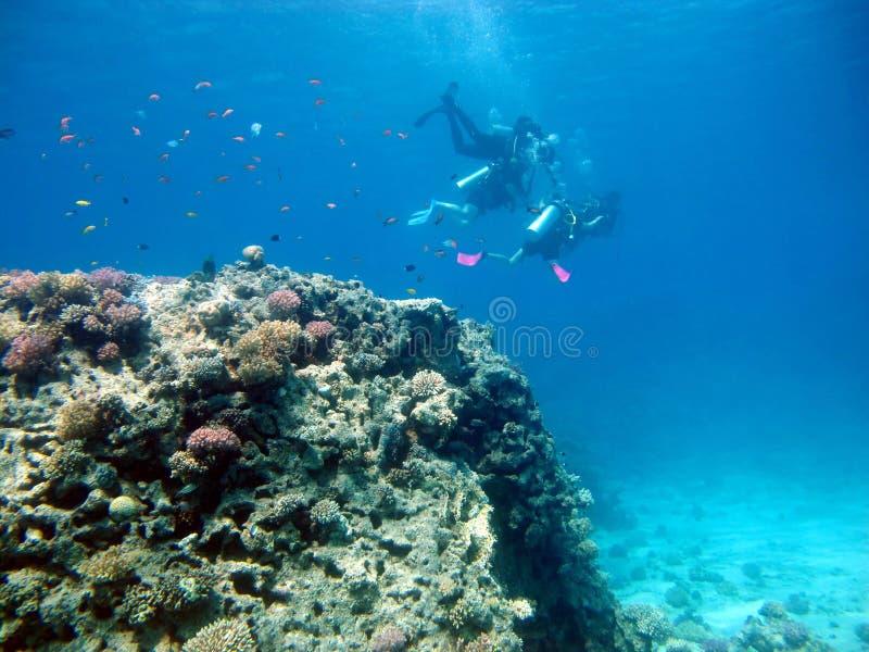 2 водолаза плавают Один водолаз учит подныриванию к другим стоковое фото