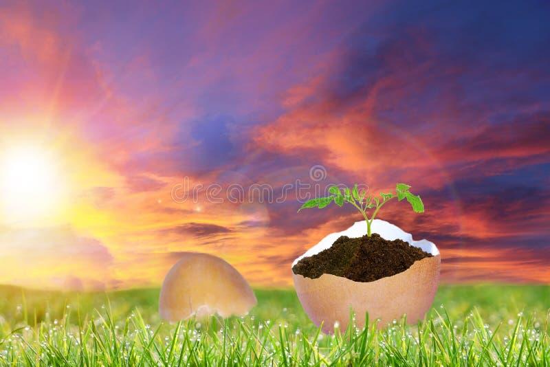 Восход солнца пасхи над треснутым пасхальным яйцом с новым космосом завода и экземпляра стоковые изображения rf