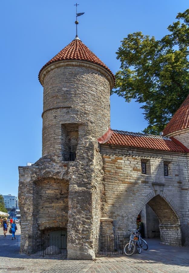 Ворота Viru, Таллин, Эстония стоковое изображение rf