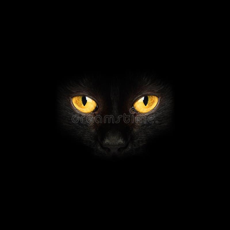 Глаза черного кота в предпосылке темноты стоковое фото