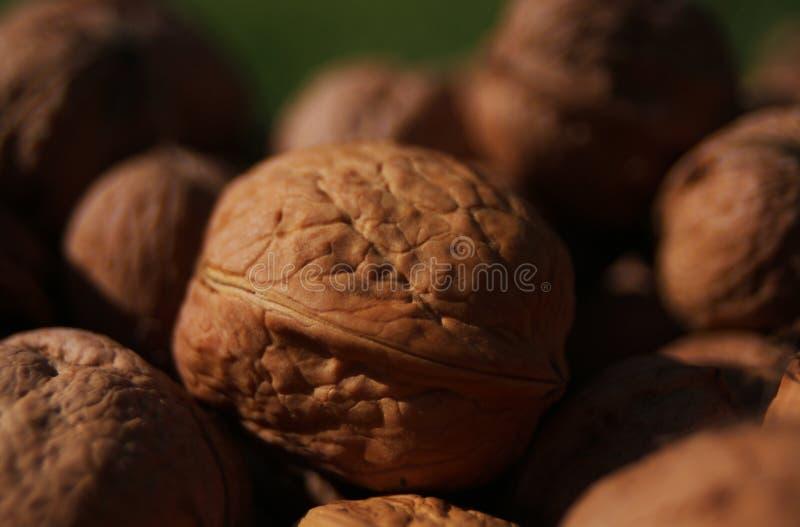 Грецкие орехи в куче стоковые изображения