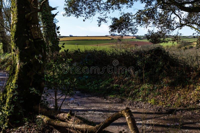 Грязная сельская местность вдоль больших деревьев перерастанных с плющом стоковые изображения