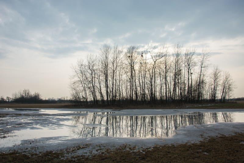 Группа в составе деревья отражая в воде стоковая фотография rf