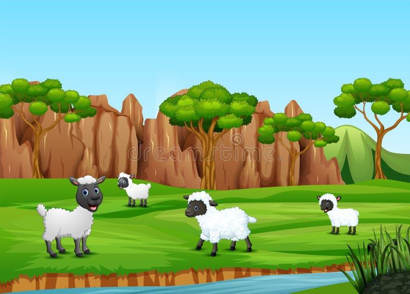 Группа в составе овцы играя в поле иллюстрация вектора
