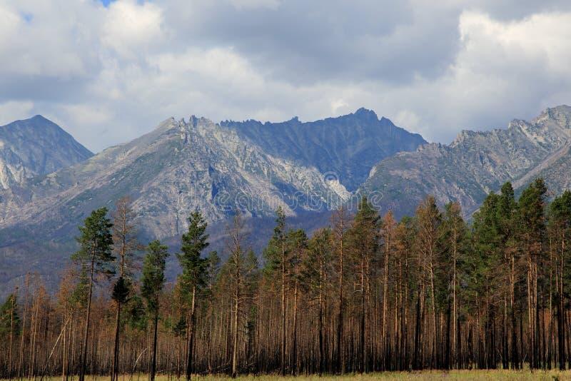 Горы гор Barguzin, этой долины реки Barguzin стоковые фотографии rf
