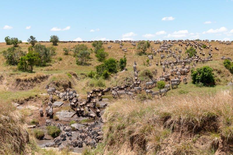 Ежегодная миграция на Masai Mara, Кении, Африке стоковое изображение