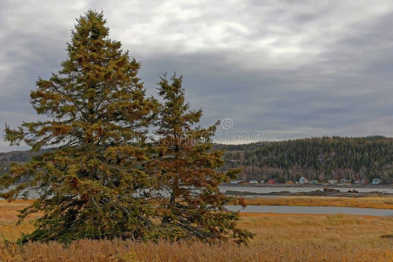 Ель бальзама в национальном парке Канаде Bic стоковые фотографии rf