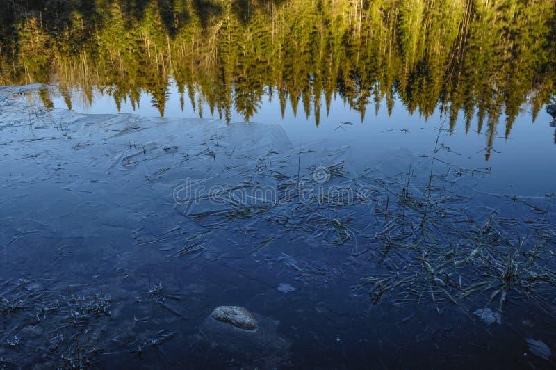 Ель бальзама и лед, район дикой природы озера кедр, западный озер Канад, заповедник леса Adirondack, Нью-Йорк, США стоковое фото