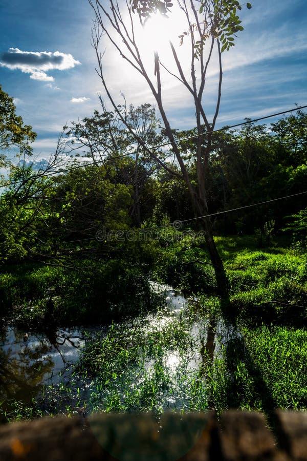 Естественное Scenary с голубым небом, водой и солнцем стоковая фотография rf