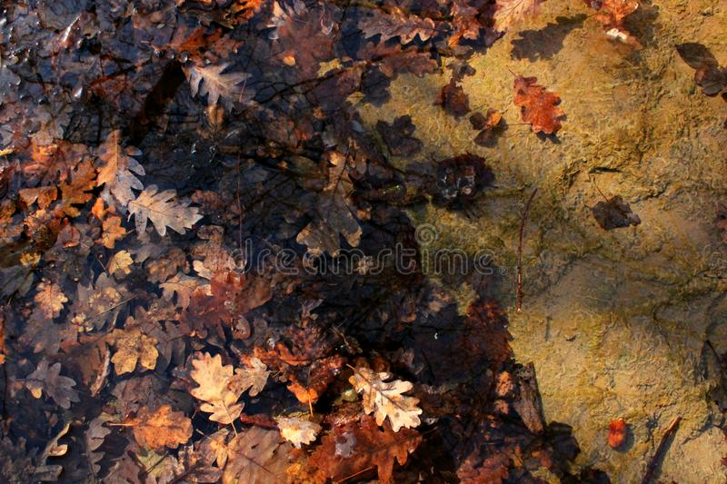 Желт-красные листья в воде, отражении неба и зареве стоковая фотография rf