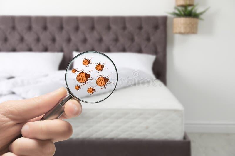 Женщина с лупой обнаруживая ошибки кровати на тюфяке, крупном плане стоковые фотографии rf