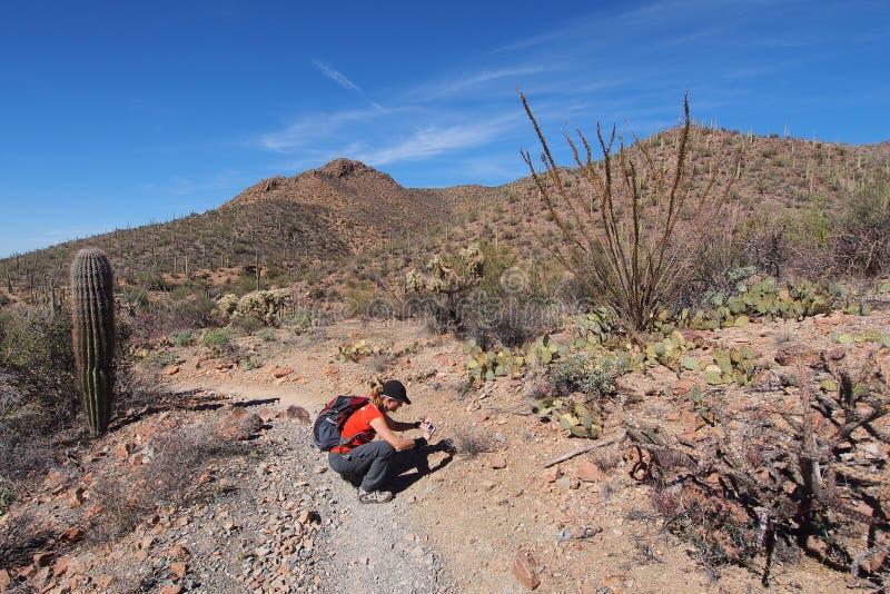 Женщина фотографируя wildflowers пустыни в национальном парке Saguaro стоковое фото