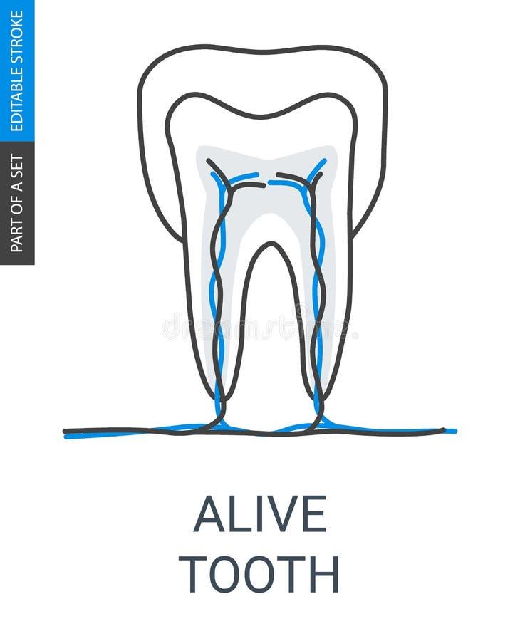 Живя зуб со значком сосудов и вен иллюстрация вектора