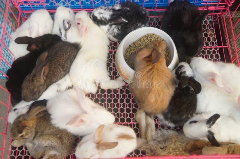 Животные в рынке любимца, коты, кролики, etc стоковое фото
